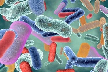 Bacteria Help Influence Blood Sugar Metabolism